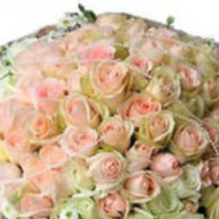 Lover Anniversary city of Changsha , Zhuzhou Jishou Zhumadian flower delivery florists 99 champagne roses