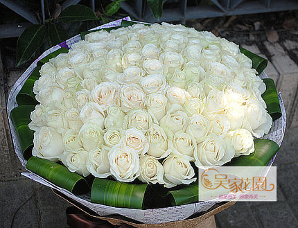 Buy free shipping 99 white roses flowers birthday flowers to marry free shipping 99 white roses flowers birthday flowers to marry shanghai city flower delivery order flowers mightylinksfo Image collections